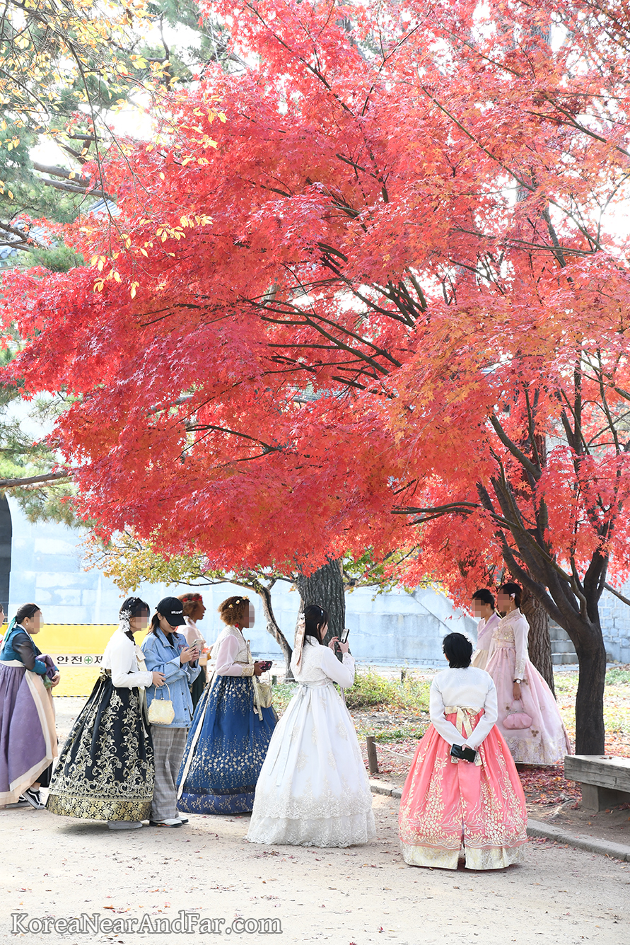 Autumn foliage and hanbok at Gyeongbokgung Seoul South Korea